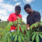 Cornell receives $35M to support cassava development for smallholder farmers in sub-Saharan Africa